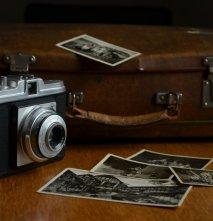 foto El bull viatger (Condesing